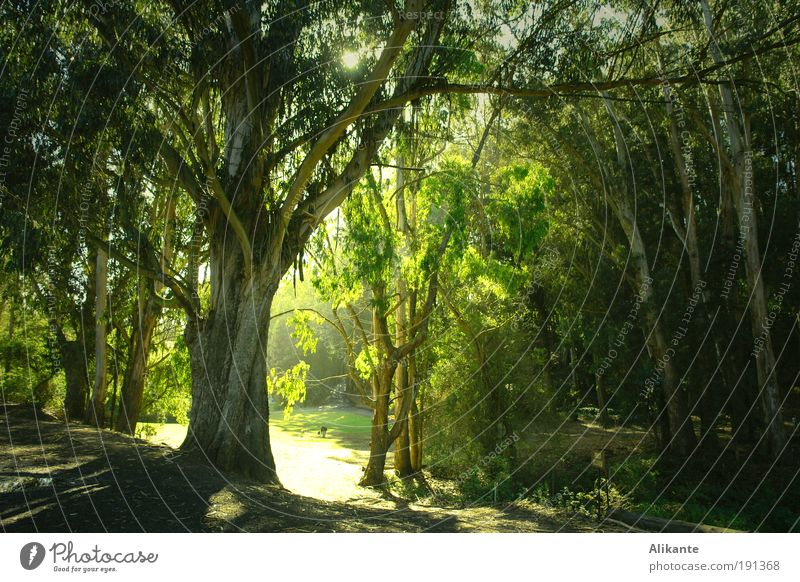 Nature Tree Green Plant Calm Leaf Forest Dark Moody Environment Light Esthetic Growth Wild Fantastic Idyll