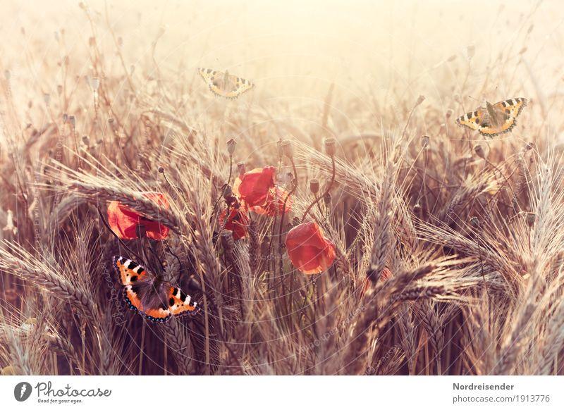 summer evening Life Harmonious Senses Calm Nature Landscape Sun Sunlight Summer Beautiful weather Plant Flower Field Animal Butterfly Blossoming Discover