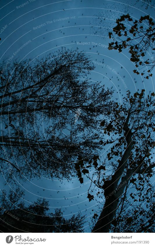 Sky Nature Blue Tree Clouds Black Forest Dark Rain Air Trip Stars Threat Exceptional Branch Curiosity