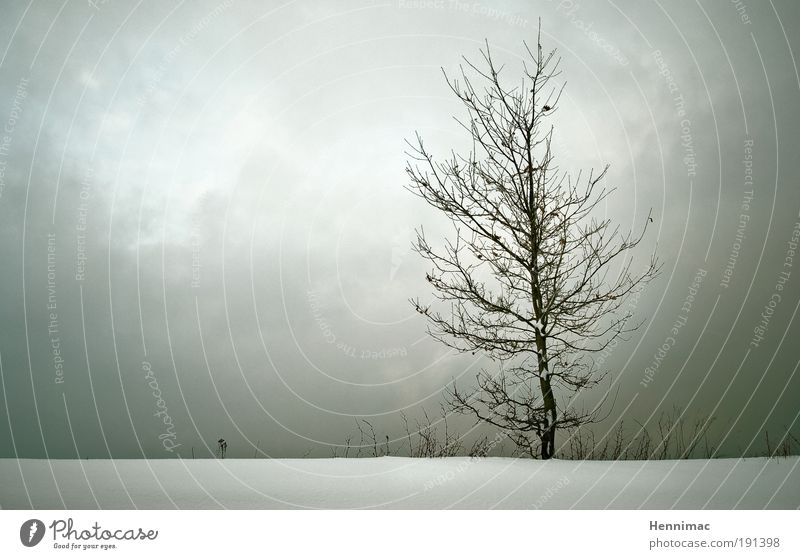 Nature White Tree Winter Clouds Loneliness Cold Emotions Gray Sadness Landscape Moody Brown Environment Horizon Grief