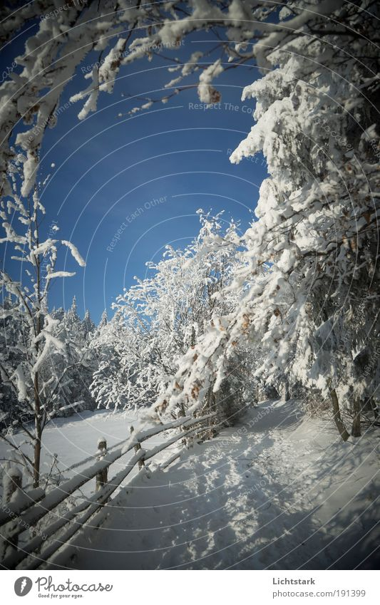 Vacation & Travel Blue White Tree Winter Forest Mountain Snow Freedom Going Dream Tourism Weather Hiking Bushes