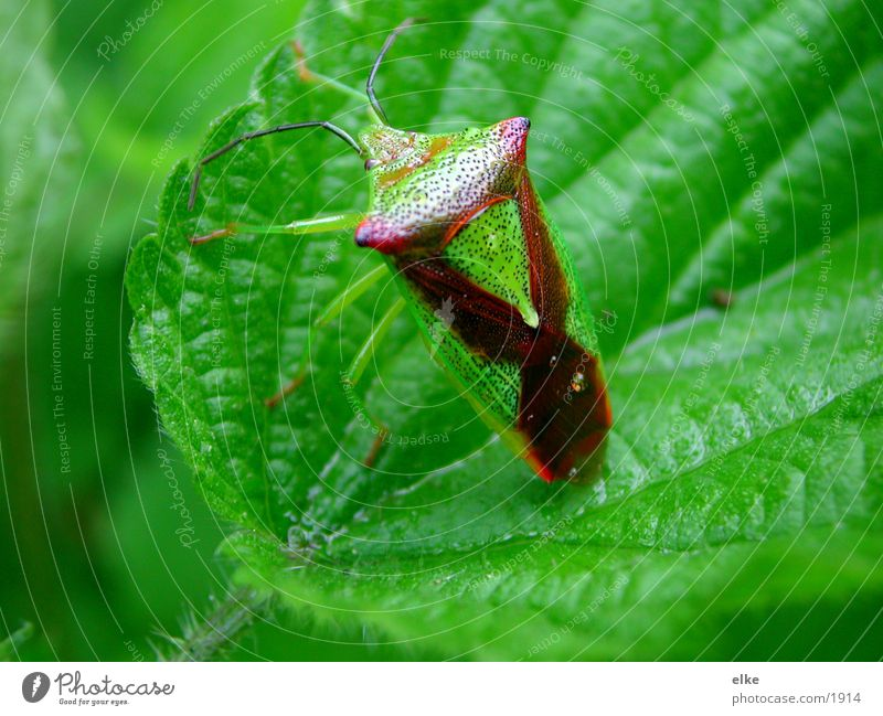 Nature Leaf Transport Bug Parasite