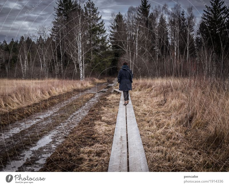 catwalk Human being Feminine 1 Nature Landscape Elements Earth Sky Clouds Autumn Winter Forest Bog Marsh Hiking Trust Safety Footbridge Wood Dry Wetlands