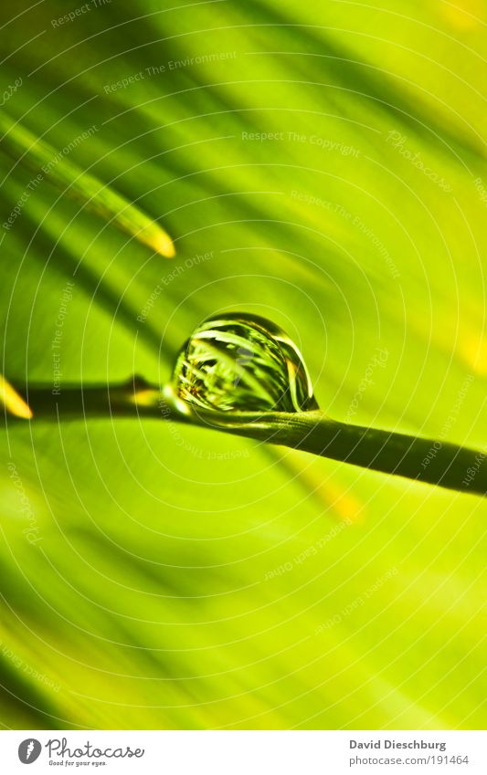 Green Pearl o'clock Life Harmonious Nature Plant Drops of water Spring Summer Foliage plant Silver Round Surface tension Dew Colour photo Exterior shot Close-up