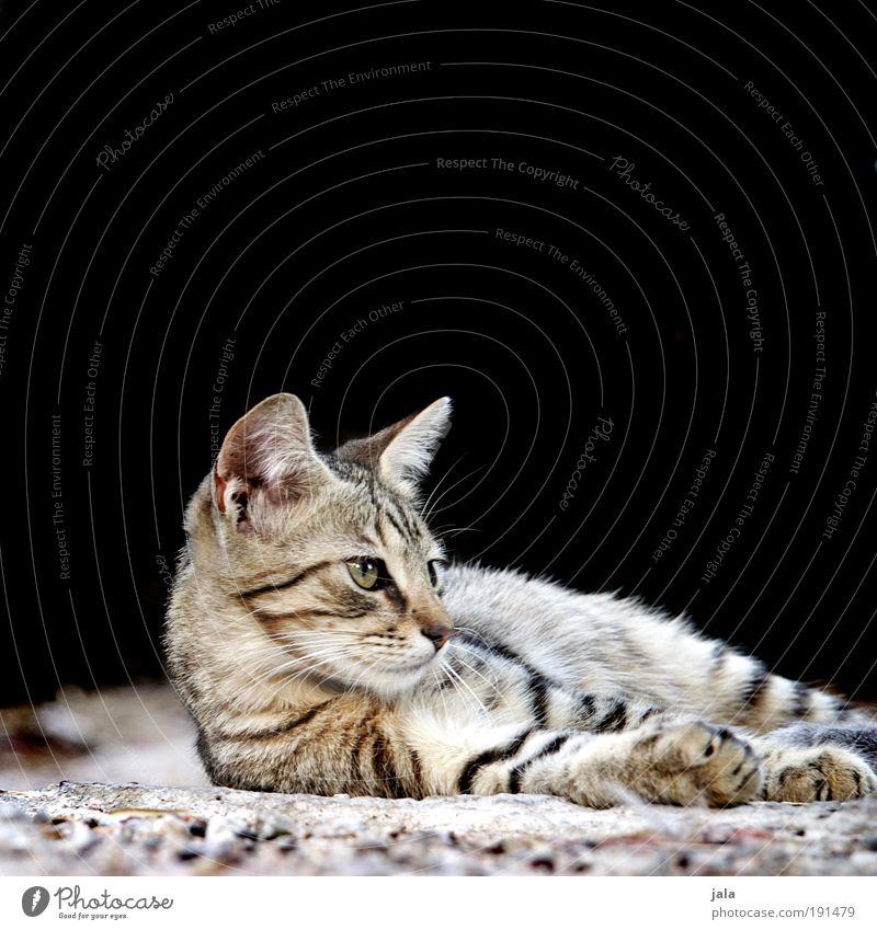 Cat Warmth Animal Soft Animal face Wild Pelt