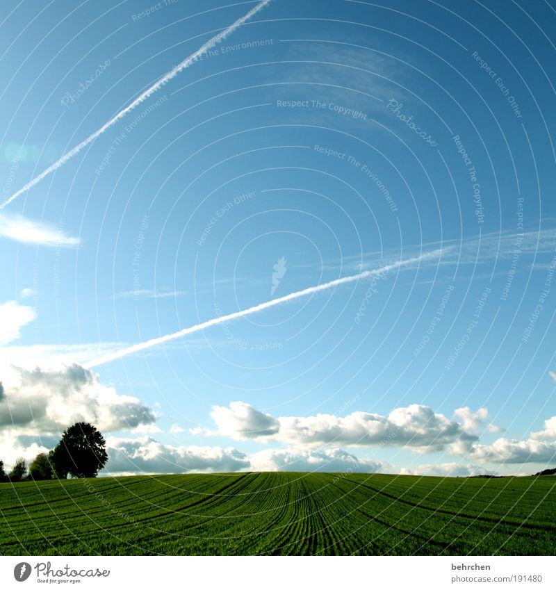 Nature Sky Tree Plant Summer Clouds Far-off places Autumn Meadow Spring Freedom Happy Landscape Contentment Power Field