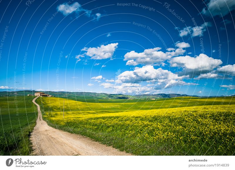 dirty road in the field in the spring Nature Landscape Sky Clouds Flower Grass Blossom Street Dirty Blue Yellow Green Italy Tuscany way Majestic Copy Space