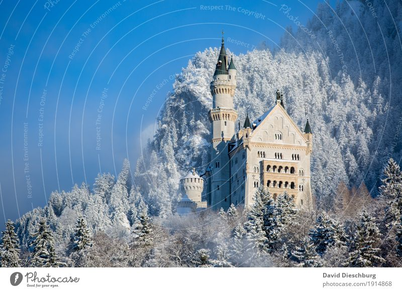 Neuschwanstein Castle Vacation & Travel Tourism Trip Sightseeing Winter Snow Winter vacation Mountain Hiking Landscape Beautiful weather Ice Frost Plant Forest
