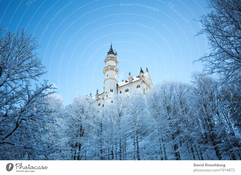 Neuschwanstein Castle Vacation & Travel Tourism Trip Sightseeing Winter Snow Winter vacation Nature Landscape Cloudless sky Beautiful weather Ice Frost Tree