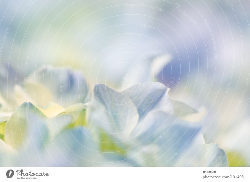Nature Blue Summer White Flower Relaxation Blossom Spring Bright Fresh Romance Soft Wellness Violet Delicate Fragrance