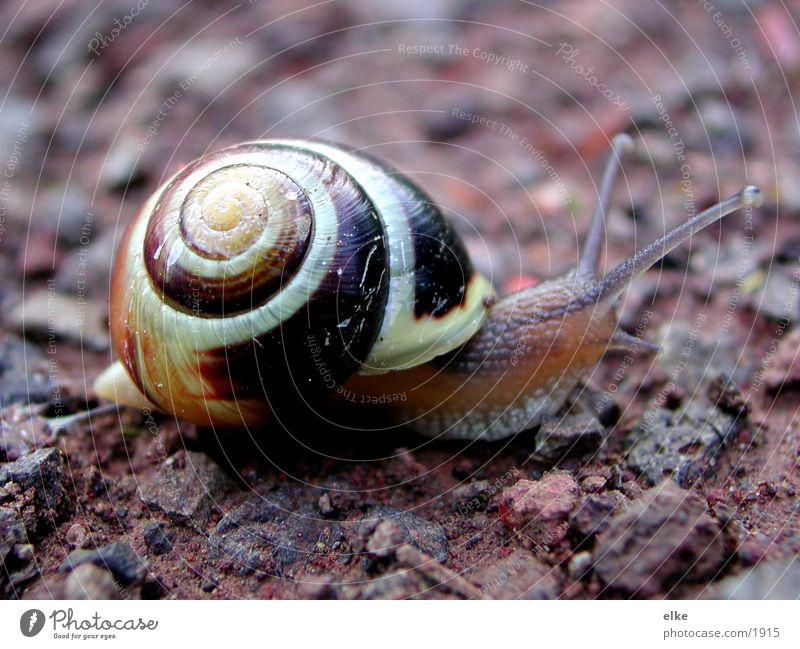 a lame snail Snail shell Transport