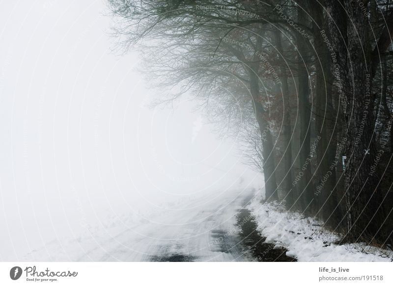 on the road to the unknown Calm Far-off places Freedom Winter Snow Nature Fog Forest Deserted Freeze Dream Infinity Cold Gloomy Moody Sadness Longing