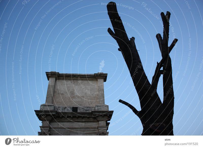 quanto sei bella roma ... Exhibition Museum Work of art Sculpture Theatre Culture Antiquity Roman era Winter Tree Ruin Manmade structures Monument