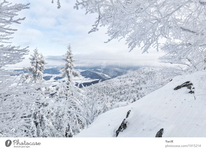 Winter in the Bavarian Forest Nature Landscape Climate Weather Ice Frost Snow Tree Bushes Mountain Peak Snowcapped peak Cold White Vantage point Narrow