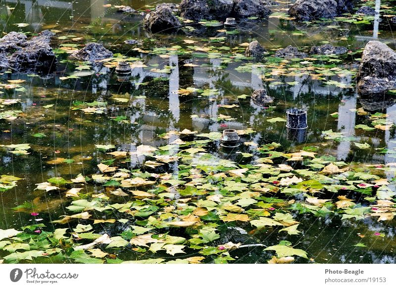 Water City Leaf Arm Leisure and hobbies Parking Insolvency Algae Well Fountain Commune Brackish water