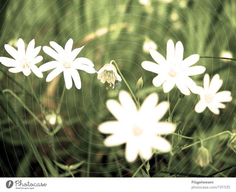 The Sieliebtmichsieliebtmichtmichnicht flower Lifestyle Relaxation Leisure and hobbies Couple Partner Environment Nature Plant Flower Grass Park Meadow