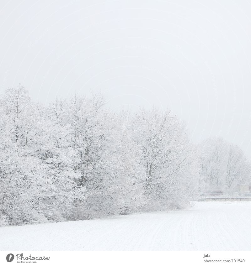 winter world Nature Landscape Sky Winter Snow Tree Bushes Park Field Cold Subdued colour Exterior shot Deserted Copy Space top Copy Space bottom Day