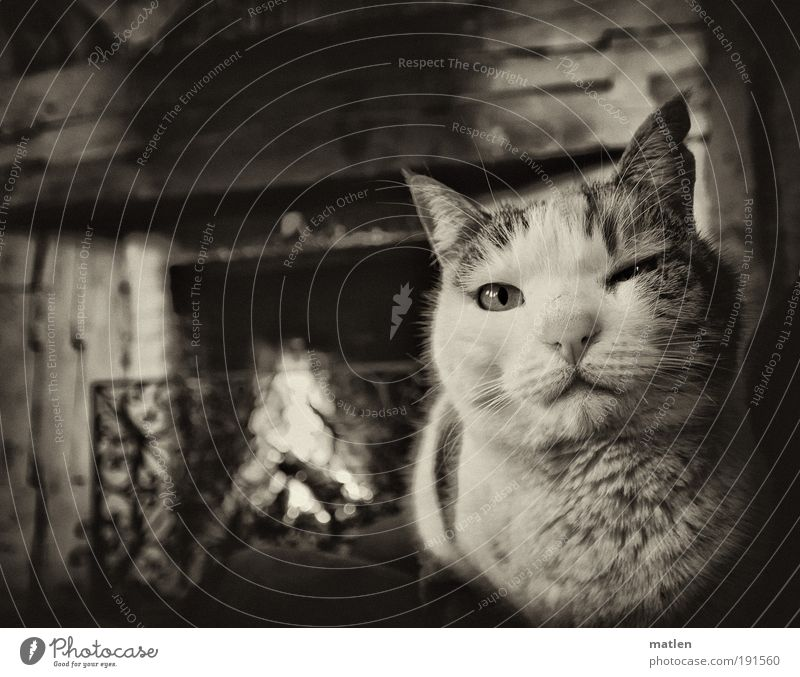 freezing cold Fireside Closing time Building Hairy chest Animal Pet Cat 1 Metal Indifferent Break Heat Relaxation Warmth Burn Black & white photo Interior shot