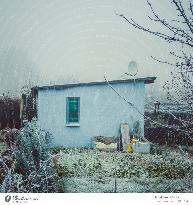 Nature Plant Blue Loneliness House (Residential Structure) Winter Window Cold Wall (building) Sadness Autumn Garden Fog Ice Branch Transience