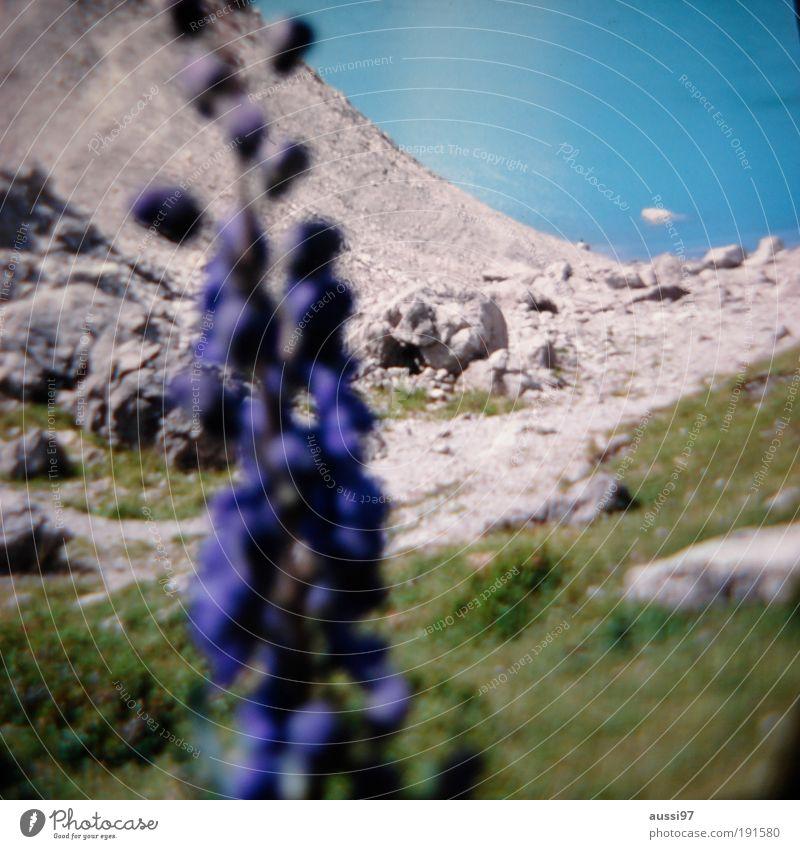 liquidity Flower Foreground blurred Depth of field hazy Mountain lake mountain Glacier vegetation solvent