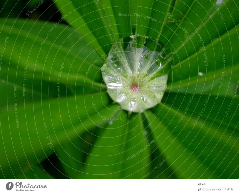 Plant Drops of water