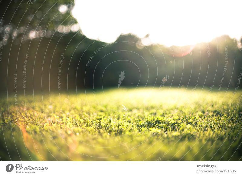 Nature Sun Green Plant Summer Vacation & Travel Calm Yellow Meadow Grass Garden Happy Park Contentment Environment Gold