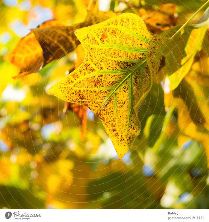 autumn lights Nature Plant Autumn Tree Leaf Natural Brown Yellow Green Esthetic Decline Transience Autumn leaves Bright Colours Moody Colour photo Pattern