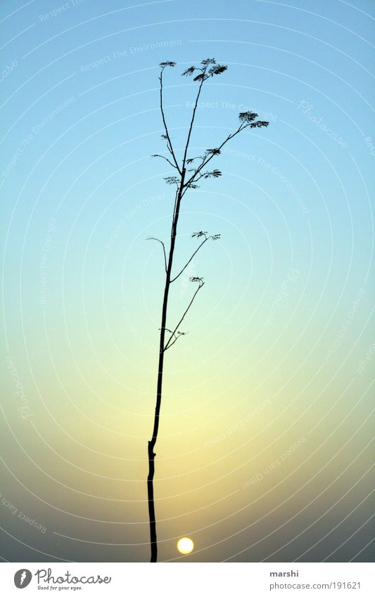 Nature Sky Tree Sun Blue Plant Landscape Moody Small Kitsch Illuminate Light Visual spectacle Branchage