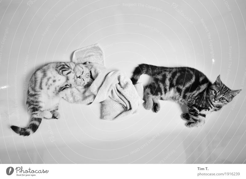 washing day Animal Pet Cat 2 Pair of animals Baby animal Animal family Wellness Interior shot Deserted Copy Space top Copy Space bottom Evening Artificial light
