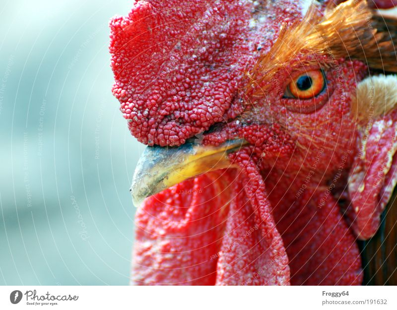 * 80* What are you looking at? Animal Farm animal Bird 1 Relaxation Multicoloured Yellow Red Spring fever Love of animals Environmental protection Colour photo