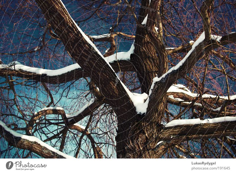 Through Environment Nature Plant Air Water Sky Winter Snow Tree Old Freeze Cool (slang) Dark Blue Brown White Calm Sadness Death Contentment Cold Power