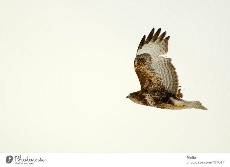 Nature Sky Animal Life Freedom Air Power Bird Elegant Environment Flying Esthetic Wing Natural Infinity