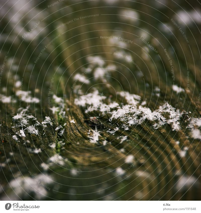 a picture with snow or the transient invasion Environment Nature Elements Water Winter Climate Snow Wood Freeze Lie Sharp-edged Fluid Uniqueness Wet Beautiful