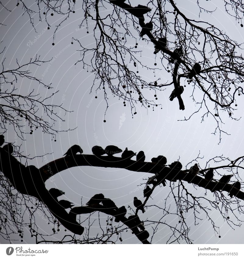 Sky Tree Calm Black Gray Friendship Contentment Together Fear Wait Safety Dangerous Threat Protection Observe Branch