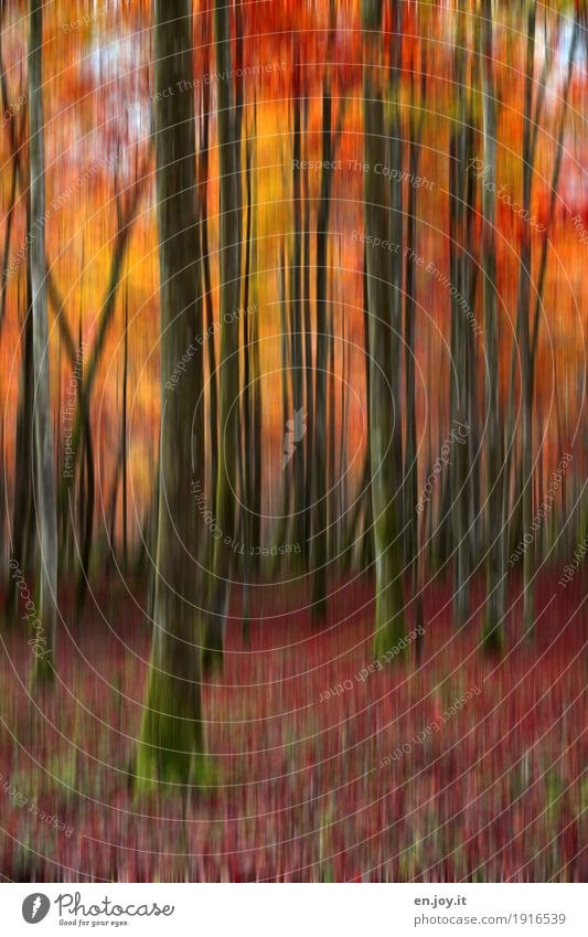 forest fire Nature Landscape Plant Autumn Tree Tree trunk Forest Yellow Orange Red Sadness Grief Bizarre Surrealism Dream Transience Irritation Change