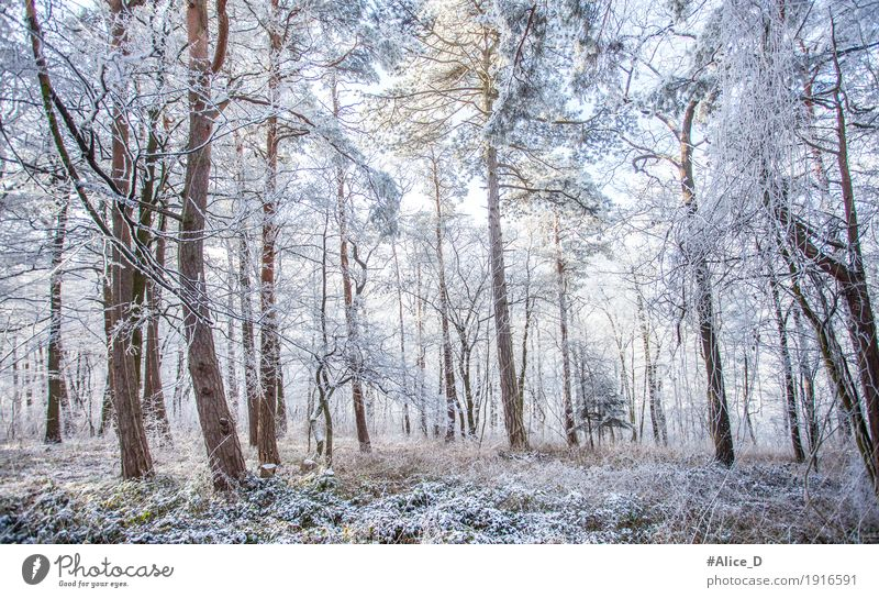 Winter Magic Forest Environment Nature Landscape Climate Climate change Weather Ice Frost Snow Tree forest landscape Cold Natural Blue White Enchanted forest