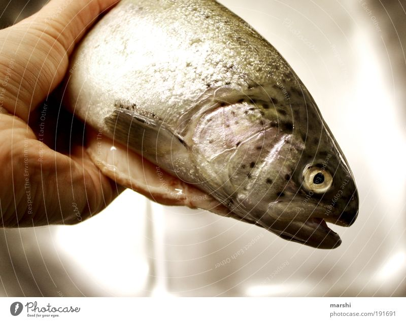 it fishes... Food Fish Nutrition Sushi Nature Animal Scales 1 To hold on Smoothness Trout Fishy Odor Colour photo Malodorous Fish head Fish eyes Dead animal