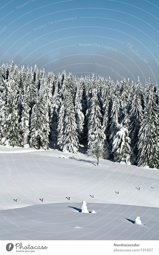 Sky Nature Vacation & Travel Sun Relaxation Landscape Calm Joy Winter Forest Mountain Snow Natural Lifestyle Moody Tourism