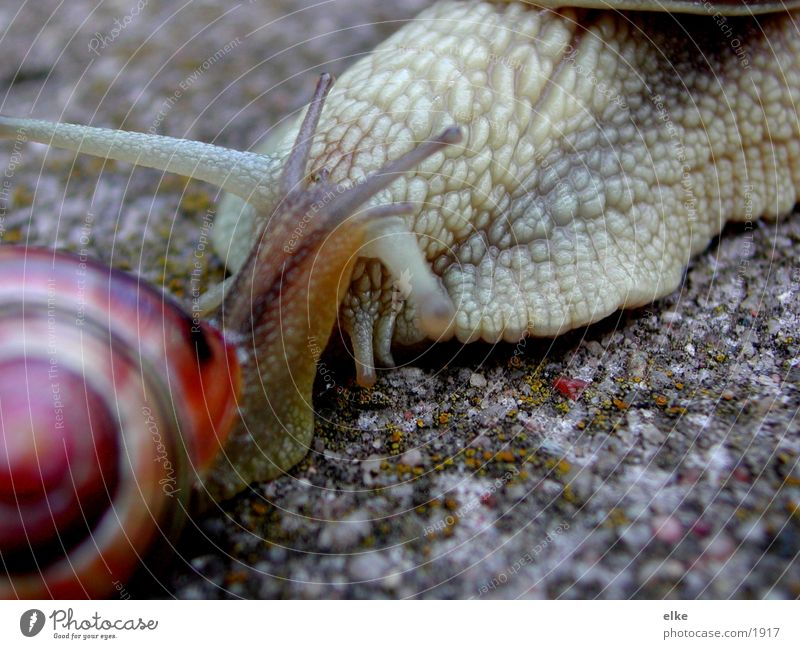 I like you very much. Snail shell Vineyard snail Transport Sand