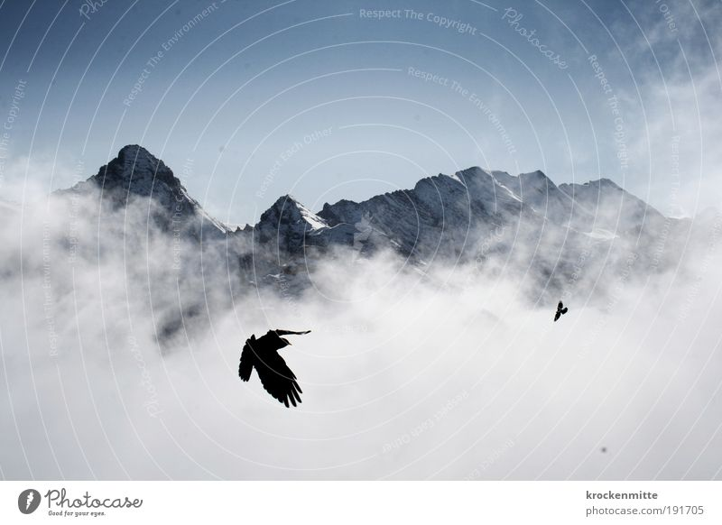 Nature Sky Winter Clouds Animal Snow Mountain Landscape Bird Hiking Fog Weather Flying Free Horizon Rock