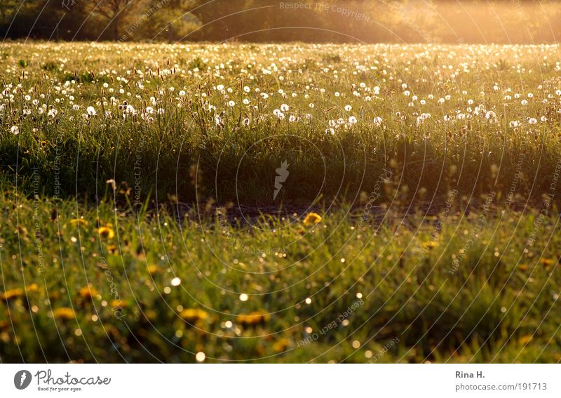 Nature Green Plant Yellow Meadow Emotions Spring Happy Landscape Contentment Field Environment Gold Authentic Joie de vivre (Vitality) Blossoming