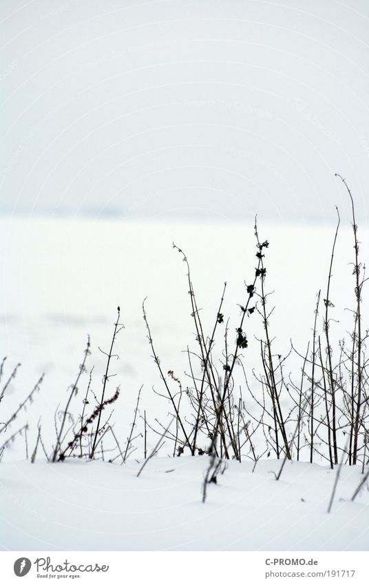 Nature White Calm Far-off places Cold Snow Ice Frost Snowdrift