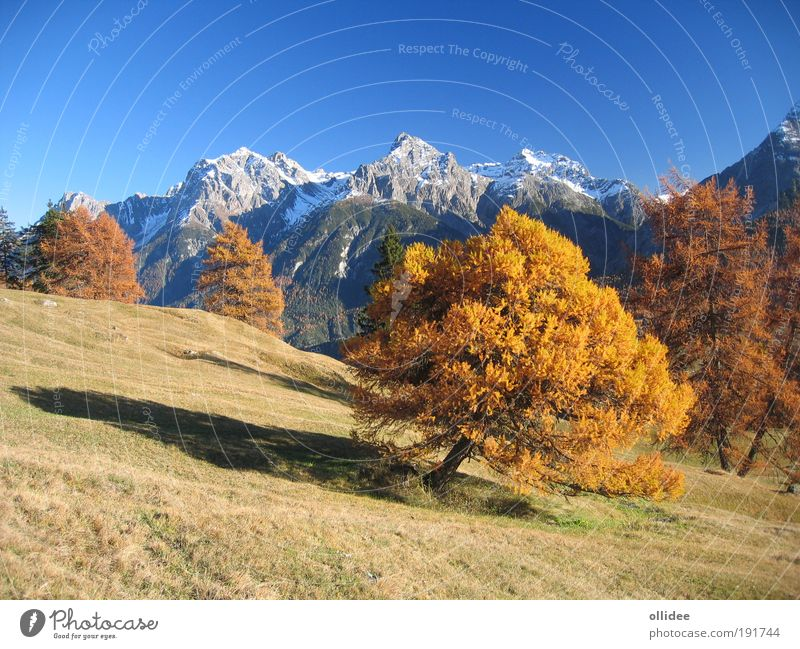 Mountain Autumn 01 Nature Landscape Beautiful weather Tree Meadow Alps Peak Snowcapped peak Walking Friendliness Fresh Natural Positive Warmth Blue Brown Yellow