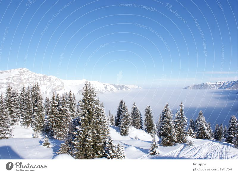 Tracks in the snow Relaxation Calm Trip Winter Snow Winter vacation Mountain Hiking Environment Nature Landscape Cloudless sky Sun Beautiful weather Fog Ice