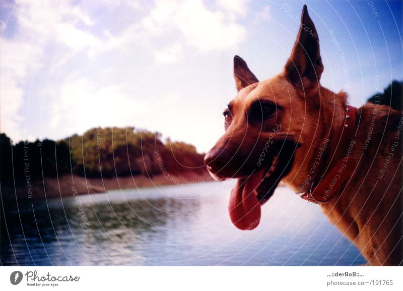 WALL AGENT Joy Happy Landscape Water Sky Beautiful weather Lakeside Deserted Animal Pet Dog Animal face Animal tracks Looking Illuminate Natural Cute Blue Brown