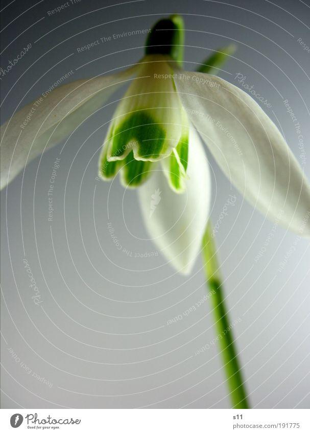 Nature Green White Beautiful Plant Flower Meadow Environment Blossom Spring Park Power Elegant Esthetic Hope Stalk
