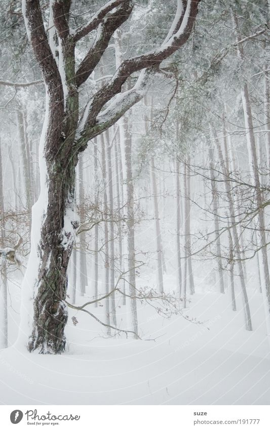 Nature White Plant Tree Loneliness Calm Winter Landscape Forest Environment Cold Snow Sadness Moody Ice Weather