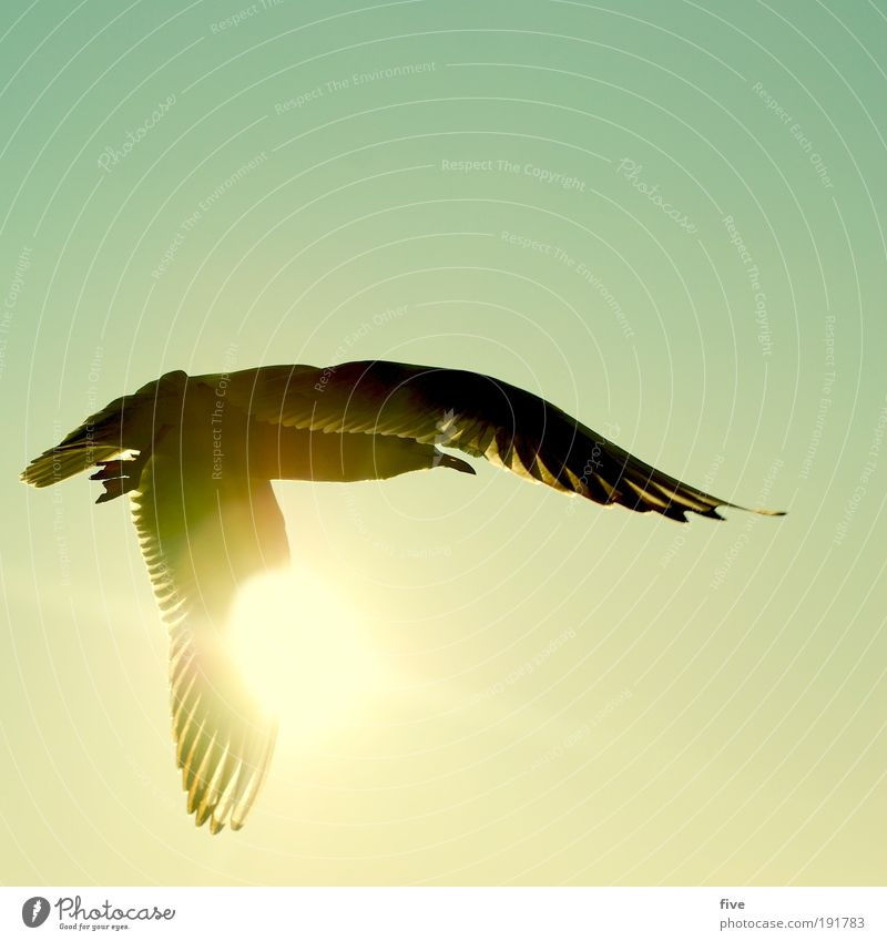 freedom Nature Sky Cloudless sky Sun Animal Bird Wing Seagull 1 Discover Flying Infinity Contentment Calm Wanderlust Freedom Colour photo Exterior shot Day