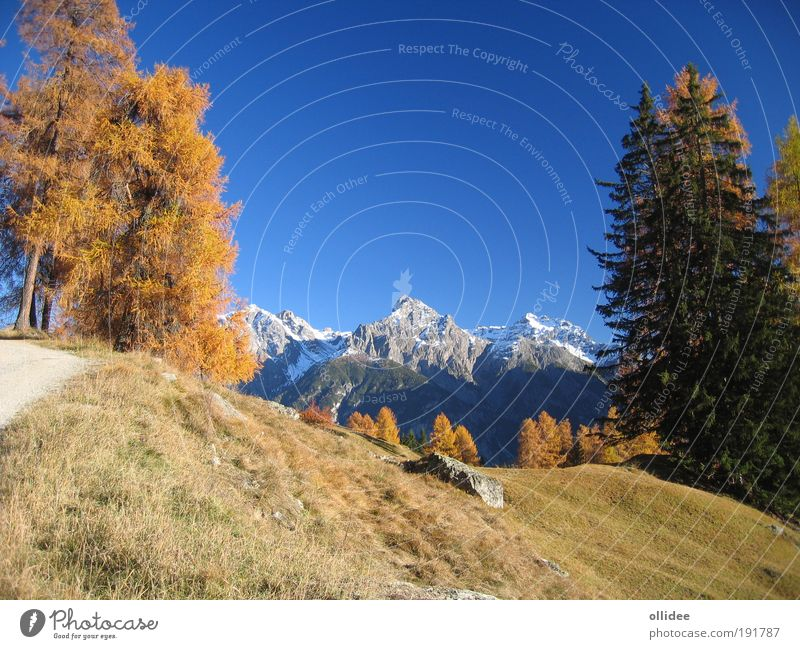Mountain Autumn 03 Environment Nature Landscape Beautiful weather Tree Alps Relaxation Positive Clean Blue Brown Yellow Esthetic Contentment Leisure and hobbies