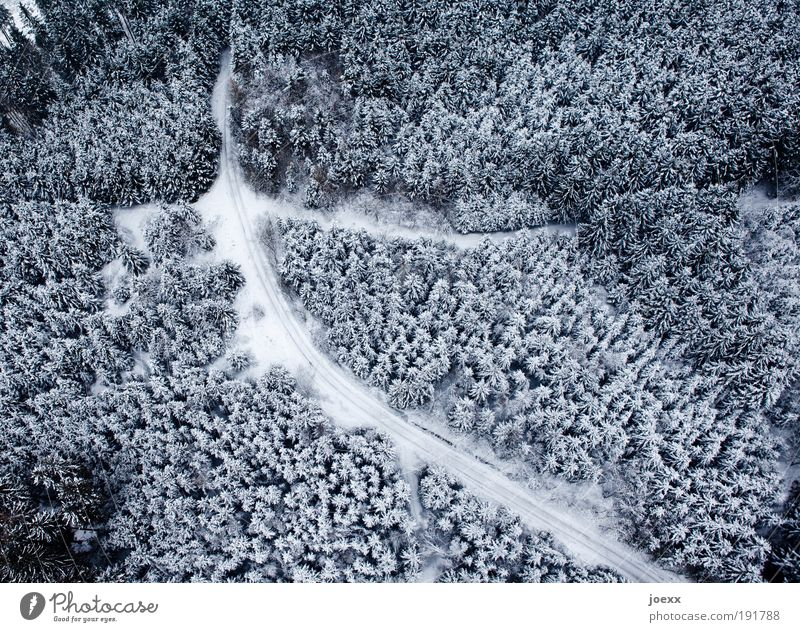 Cutting Nature Landscape Winter Ice Frost Snow Forest Street Lanes & trails Observe Dream Tall Above Under Blue Black White Bird's-eye view Winter forest